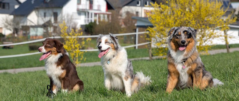 Maggie mit ihren Söhnen