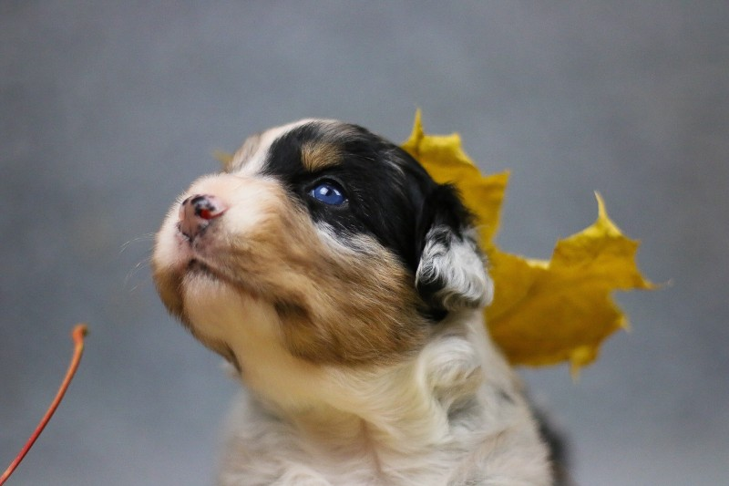 Autumn 3 Woche